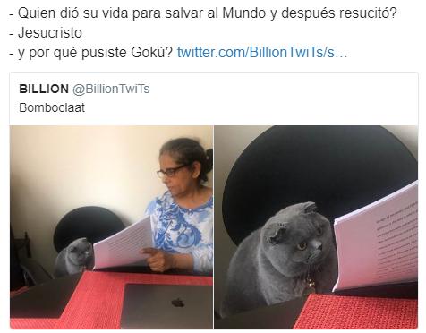 Memes Y Porque Pusiste Y Del Gato Reganado