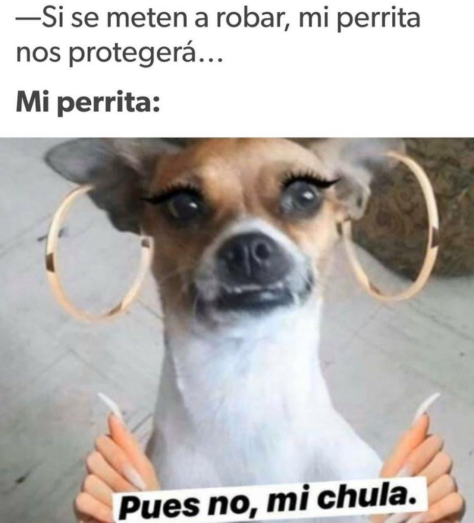 MEMES De 'Pues No Mi Ciela' Origen Y Plantilla